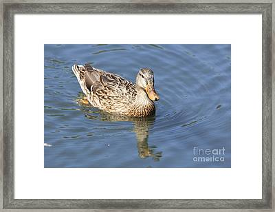 Swimming Around Framed Print by Tricia Goode