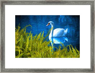Swimming Swan And Ferns Framed Print by Kenny Francis