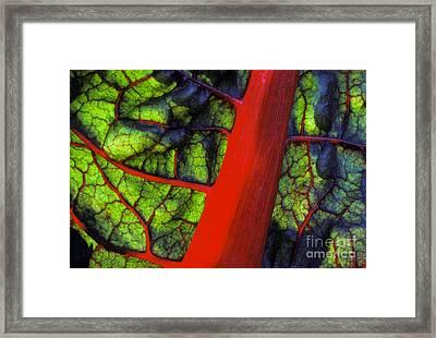Swiss Chard Framed Print by Ron Sanford