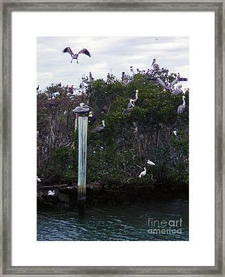 Swooping In Framed Print by Megan Dirsa-DuBois