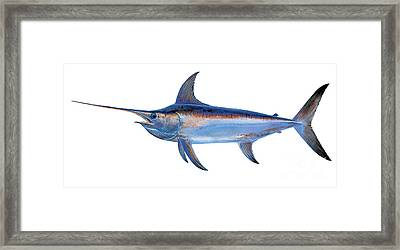 Swordfish Framed Print by Carey Chen