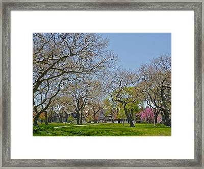 Sycamores In Spring 2 Framed Print by Ellen Paull