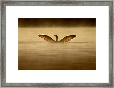 Symmetry Framed Print by Rob Blair