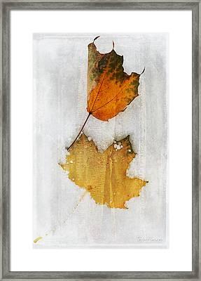 Synchronized Snow Dance Framed Print by Terri Harper