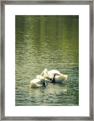 Synchronized Swan Bath Framed Print by Laurie Perry