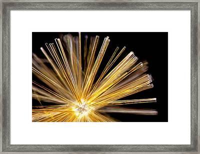 Synedra Diatom Group Framed Print by Gerd Guenther