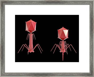 T4 Bacteriophage Framed Print by Maurizio De Angelis