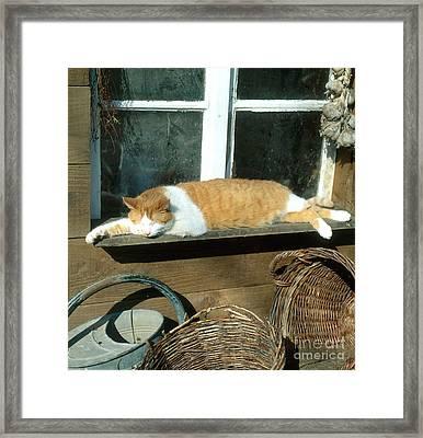 Tabby Cat Framed Print by Hans Reinhard