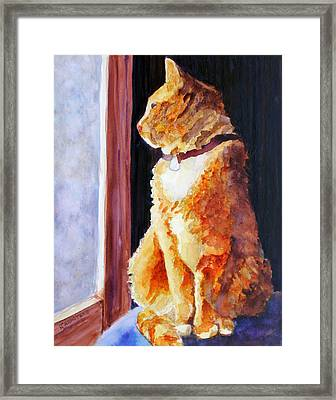 Tabby's Favorite Seat Framed Print by Jenny Armitage