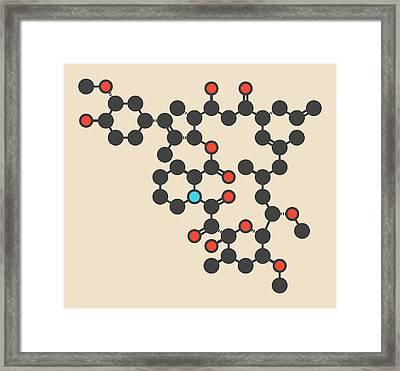 Tacrolimus Immunosuppressant Molecule Framed Print by Molekuul