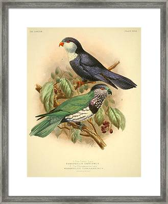 Tahiti Lory Framed Print by J G Keulemans