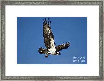 Take Flight Framed Print by Mike  Dawson