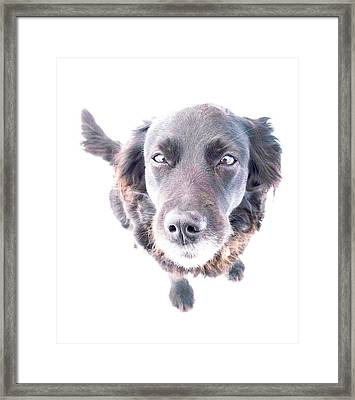 Take Me Home Immidiately, I'm Freezing  Framed Print by Hilde Widerberg