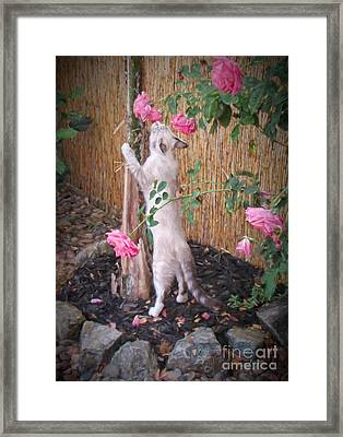 Take Time To Smell The Roses Framed Print by Peggy Hughes