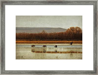 Takeoff Of The Cranes Framed Print by Priscilla Burgers