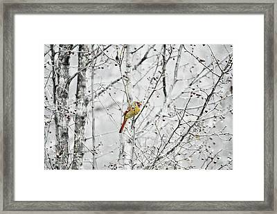 Taking A Moment 2 Framed Print by Chastity Hoff