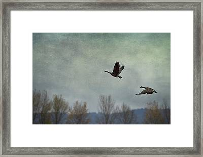 Taking Flight Framed Print by Belinda Greb