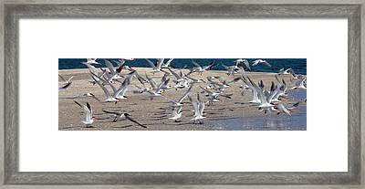Taking Flight Framed Print by Jon Neidert
