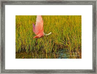 Taking Flight Framed Print by Lynda Dawson-Youngclaus