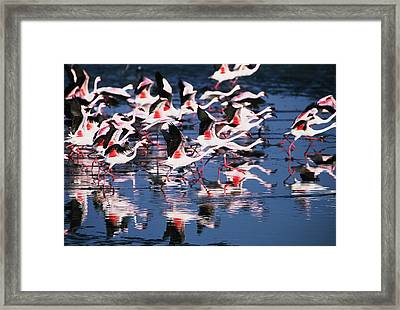 Taking Flight Framed Print by Stefan Carpenter
