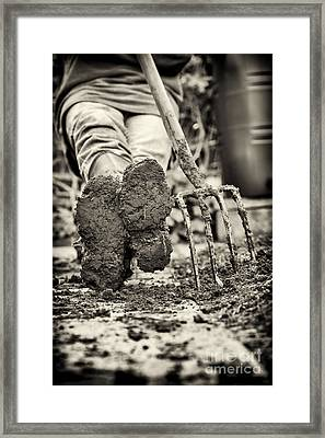 Chillaxing Framed Print by Tim Gainey