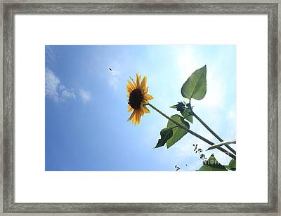 Taking Off Framed Print by Lotus
