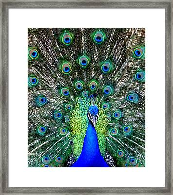 Talk Of The Walk Framed Print by Karen Wiles