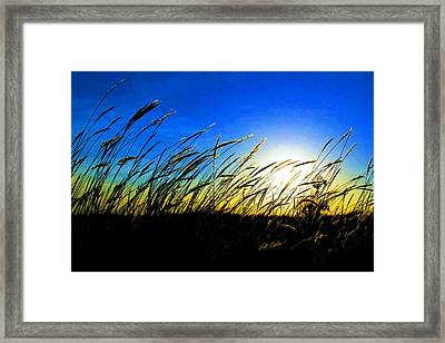 Tall Grass Framed Print by Bill Kesler