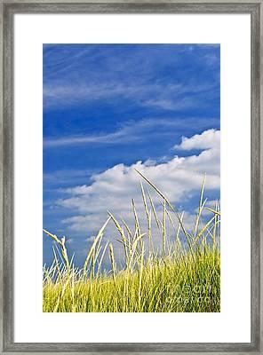 Tall Grass On Sand Dunes Framed Print by Elena Elisseeva