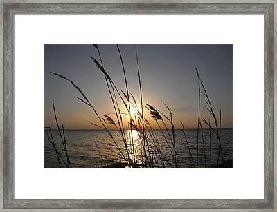 Tall Grass Sunset Framed Print by Bill Cannon