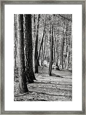 Tall Timbers  Framed Print by A New Focus Photography