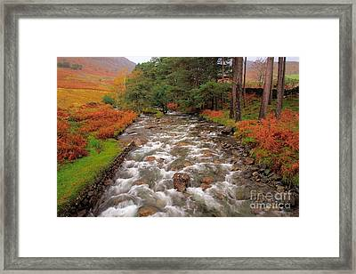 Tall Trees And Rushing Water Framed Print by Wobblymol Davis