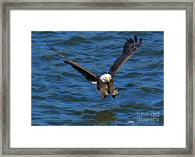 Talons First Framed Print by Mike Dawson