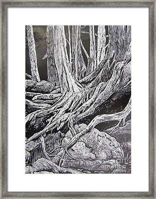 Tangled Roots Framed Print by Bev Morgan