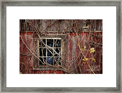 Tangled Up In Time Framed Print by Lois Bryan
