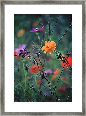 Tangles - A Dance Of Flowers And Weeds Framed Print by Michael Flood