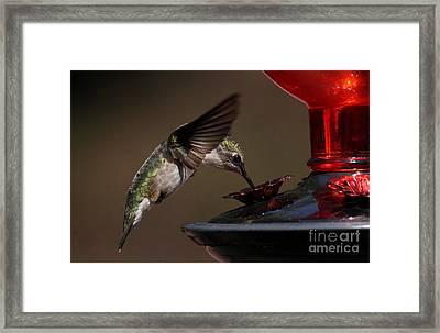 Tanking Up Framed Print by Douglas Stucky