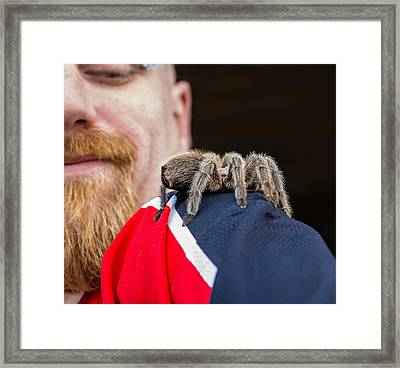 Tarantula Love Framed Print by Steve Harrington