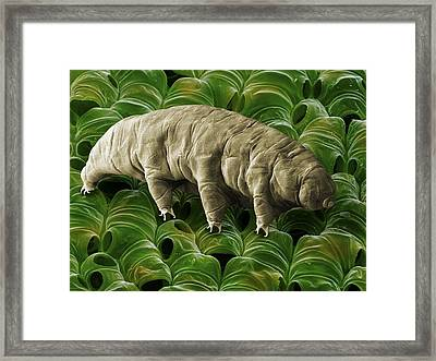 Tardigrade Or Water Bear Framed Print by Science Photo Library