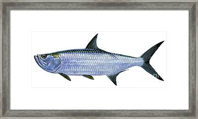 Tarpon Framed Print by Carey Chen