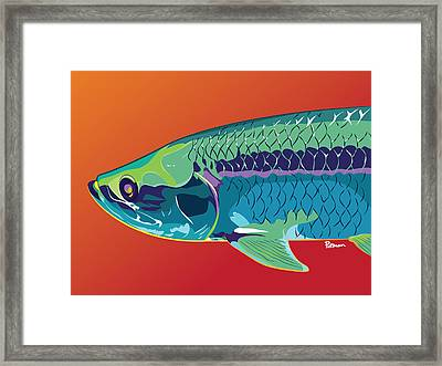 Tarpon Colors Framed Print by Kevin Putman