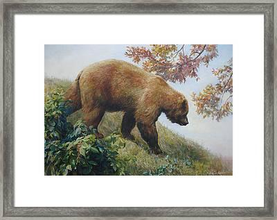 Tasty Raspberries For Our Bear Framed Print by Svitozar Nenyuk