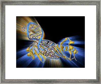 Tata Box-binding Protein And Dna Framed Print by Laguna Design