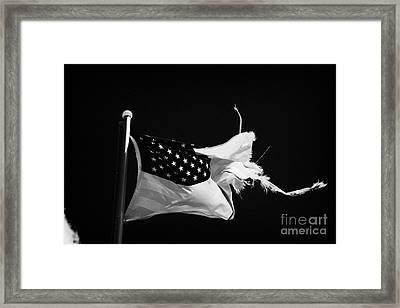 Tattered Torn Worn Us Flag Flying From Flagpole Framed Print by Joe Fox