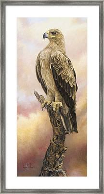 Tawny Eagle Framed Print by Lucie Bilodeau