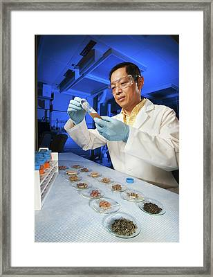 Tea Supplements Research Framed Print by Peggy Greb/us Department Of Agriculture