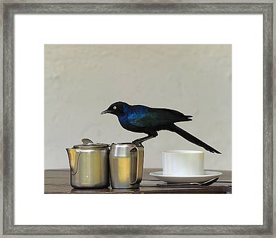 Tea Time In Kenya Framed Print by Tony Beck