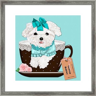 Teacup Baby Maltese Framed Print by Margaret Newcomb