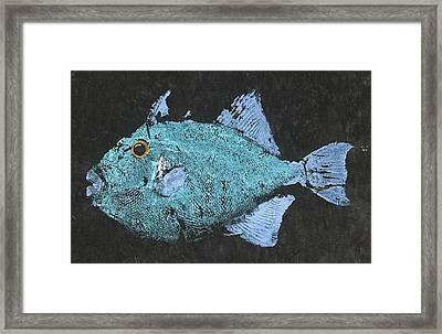 Gyotaku Triggerfish Framed Print by Captain Warren Sellers