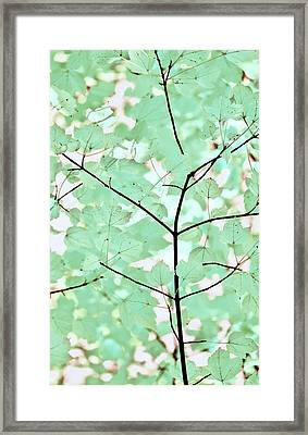 Teal Greens Leaves Melody Framed Print by Jennie Marie Schell